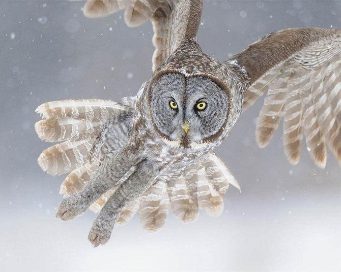 серая сова скачать торрент - фото 7